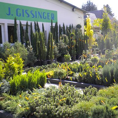 Ammann Baumschule Gissinger Frankreich Wasserpflanze